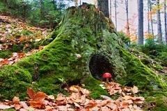 Chata lesních skřítků